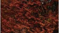 160301041919-ruta-rylaite-vilnius.jpg
